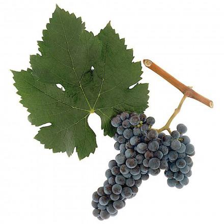 Сок виноградный сорт Мерло концентрированный красный BRIX 68% 5 кг