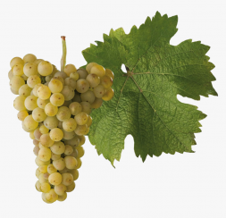 Сок виноградный сорт Рислинг концентрированный белый BRIX 68% 5 кг