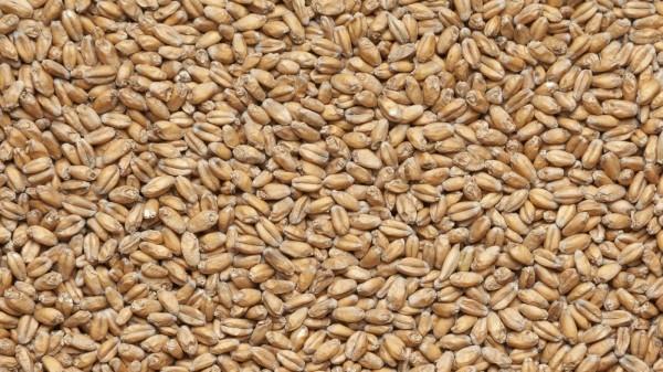 Пшеничный, Курский солод 1 кг