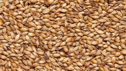 Карамельный 100, Курский солод 1 кг
