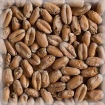 Солод Солод Шато Вит Блан Пшеничный (Wheat Blanc Malt), Castle Malting 1 кг